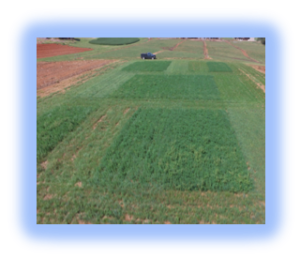 Image of forage plots
