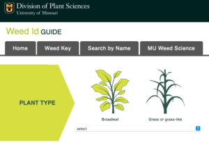 Cover photo for Weed ID Guide